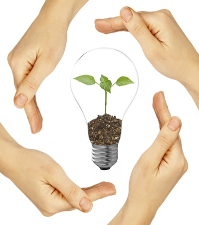welfare plant: bulb in a hand on a background