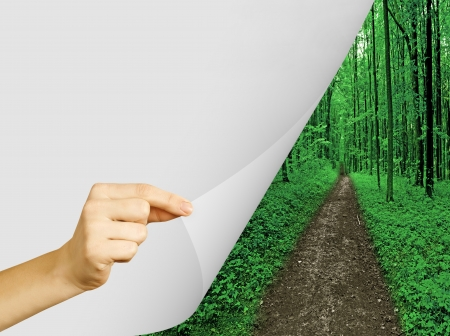 trailway: forest trees  nature green wood sunlight backgrounds  Stock Photo