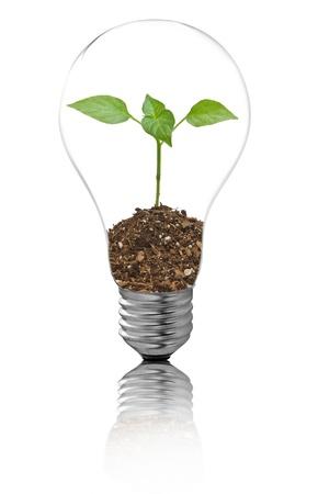 overuse: bulb on a white background Stock Photo