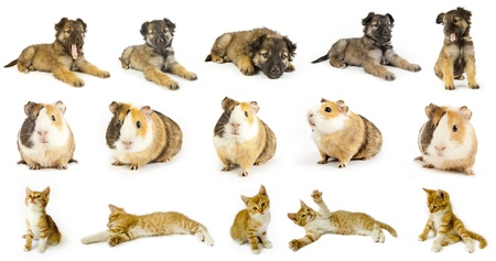 collection animals  the white backgrounds photo
