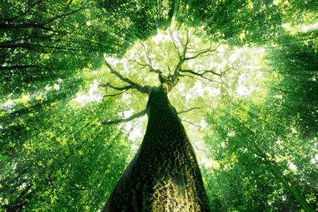 foresta: natura. percorso nel bosco con la luce solare Archivio Fotografico