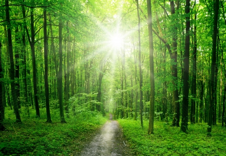 nature tree . pathway in the forest with sunlight backgrounds.