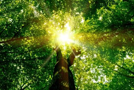 森の木の自然の緑の木日光の背景 写真素材