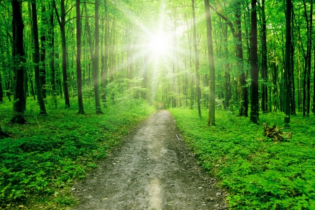 nature. pathway in the forest with sunlight Stock Photo