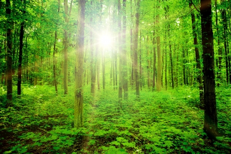 trailway: nature tree . pathway in the forest with sunlight backgrounds.