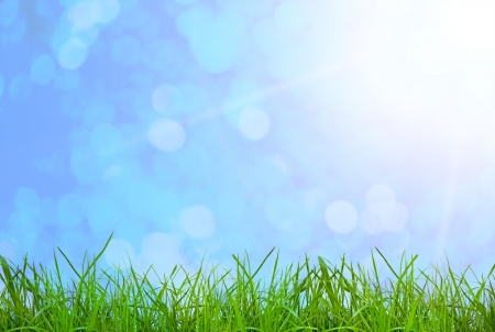 green grass  on the sky backgrounds photo