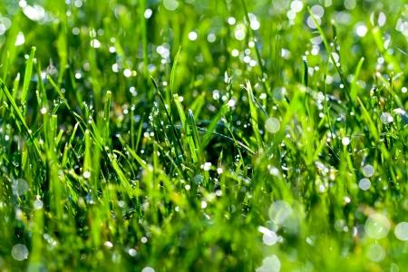 Gocce d'acqua su sfondo verde erba Archivio Fotografico