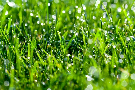 Water drops on the green grass background