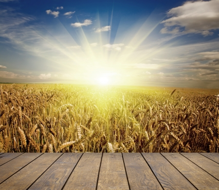 cornfield: wood textured backgrounds in a room interior on the sky backgrounds Stock Photo