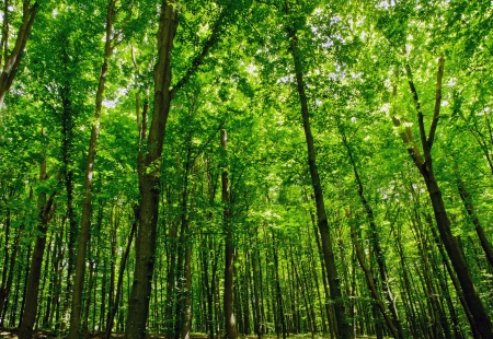 trailway: forest trees. nature green wood sunlight backgrounds
