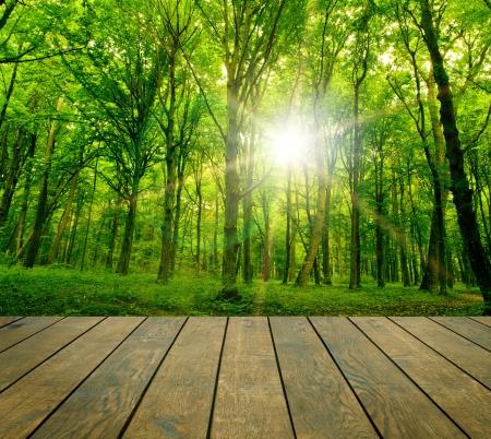 foresta: sfondi di legno texture in un interno camera su sfondi cielo