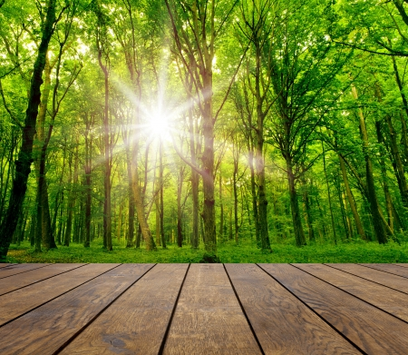 森林背景木材のテクスチャの背景 写真素材