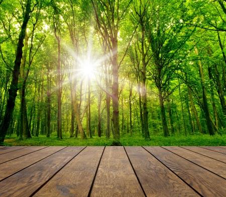 hout geweven achtergronden op het bos achtergrond