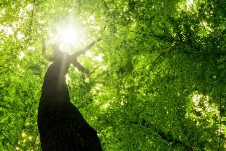 숲 나무. 자연 녹색 나무 햇빛 배경.