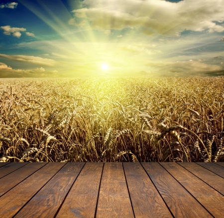 cornfield: wood textured backgrounds in a room interior on the field and meadow backgrounds Stock Photo