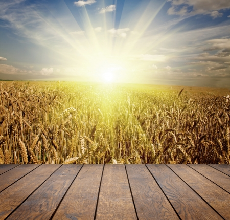 wheat fields: wood textured backgrounds in a room interior on the sky backgrounds Stock Photo