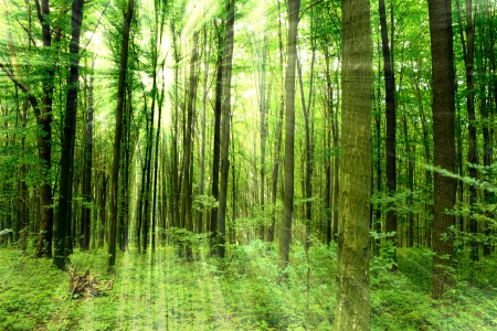 trailway: forest trees. nature green wood sunlight backgrounds.