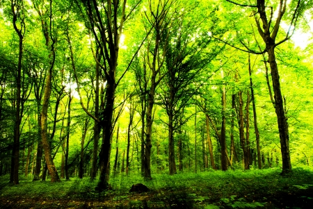 forest trees. nature green wood sunlight backgrounds. photo