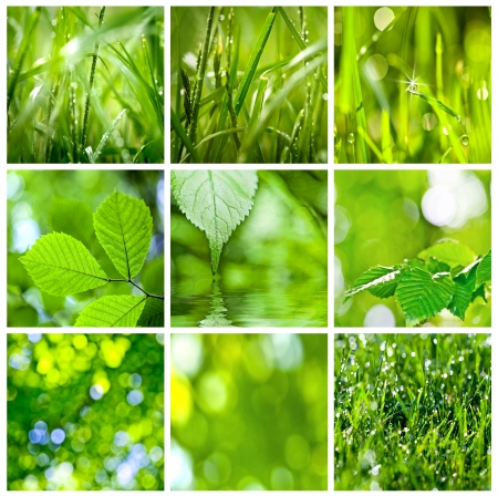 collection of green grass and leaves. Spring backgrounds photo
