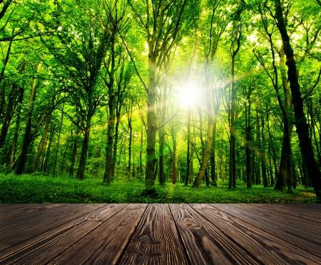 hout geweven achtergronden in een kamer interieur op het bos achtergrond
