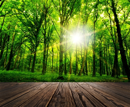 leafy trees: madera de textura antecedentes en una habitaci�n interior en los entornos forestales