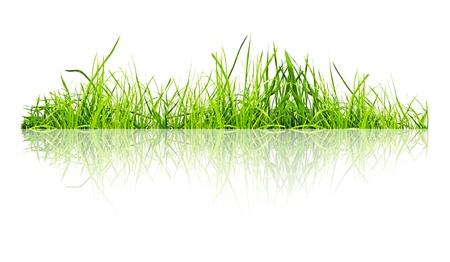 白い背景で緑の草の分離