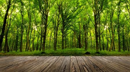 森林背景で部屋のインテリアに木製のテクスチャの背景