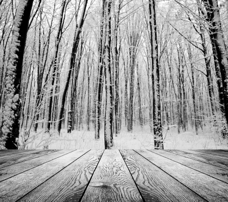겨울 숲 배경에 실내 인테리어에 나무 질감 배경