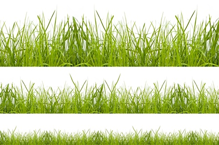 blades of grass: green grass isolation on the white backgrounds Stock Photo