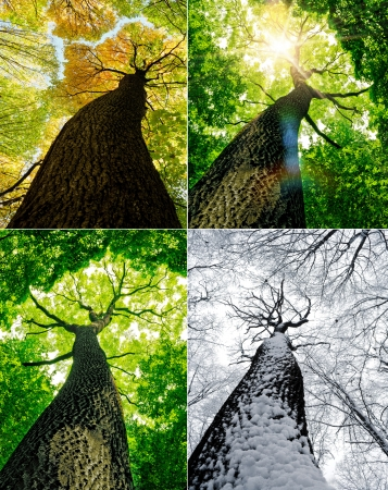season forest trees. nature green, gold, white wood sunlight backgrounds. winter, autumn, summer. photo