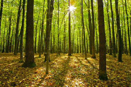 trailway: forest trees  nature green wood sunlight backgrounds  autumn Stock Photo