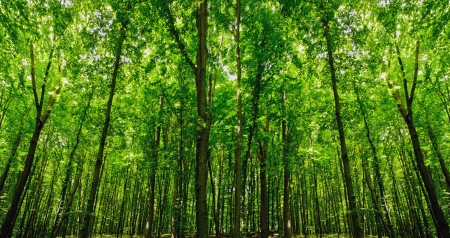 trailway: forest trees with nature green wood sunlight  Stock Photo