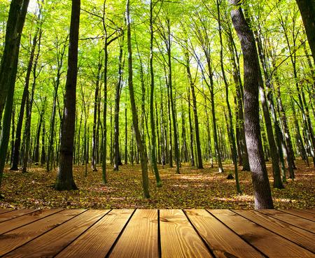 숲 질감 배경 방 인테리어에 배경