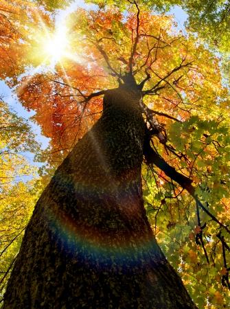 秋の森の木。自然の緑の木の日光の背景。