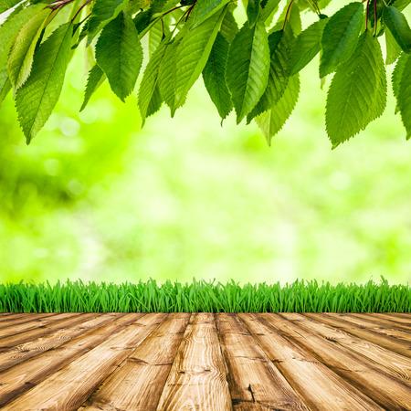 배경 룸 인테리어. 푸른 나뭇잎과 햇빛과 나무 바닥 신선한 봄 그린 잔디.