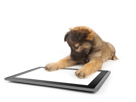 one tablet on the white backgrounds and dog on the tablet  Stock Photo