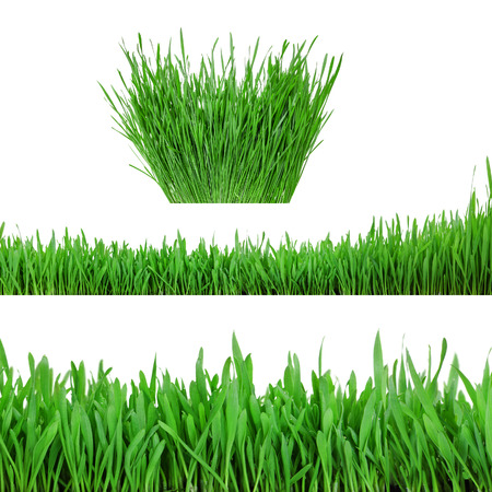 collection sprouts of green wheat grass on white background