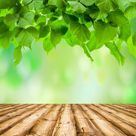 knothole: Background room interior. wood floor.  Fresh spring green leaf on the green sky backgrounds