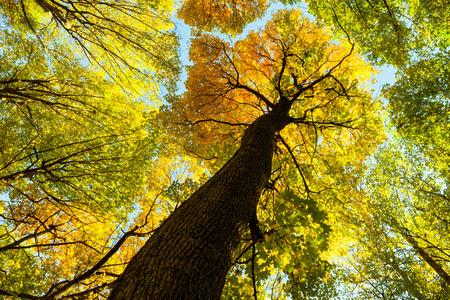가을 숲 나무. 자연 녹색 나무 햇빛 배경입니다. .