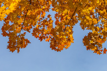 autumn forest trees. nature yellow leaf sunlight backgrounds photo