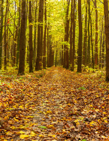 trailway: autumn forest trees. nature green wood sunlight backgrounds Stock Photo