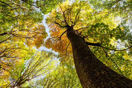 trailway: autumn forest trees. nature green wood sunlight backgrounds.