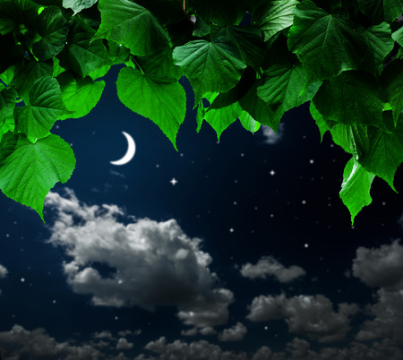 summer night: forest trees leaf. nature green wood on the hight sky backgrounds.