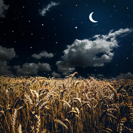 잔디 필드. 하늘 아래 초원 밀