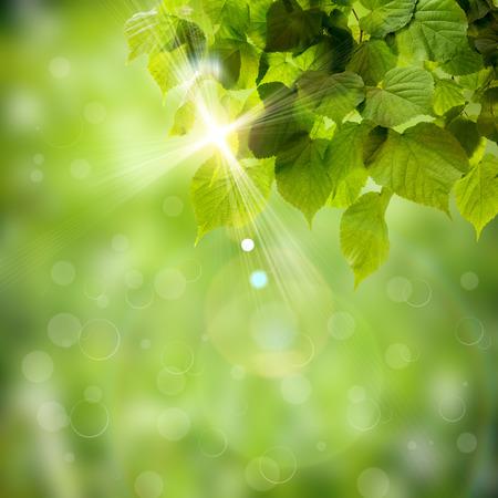 녹색 나뭇잎과 햇빛 배경으로 신선한 봄 그린 필드 잔디