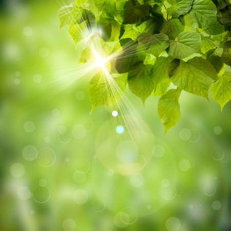 Fresh spring green field grass with green bokeh and sunlight background Reklamní fotografie