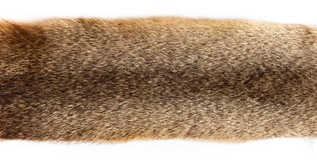 fluffy tuft: fur texture close-up on the white background