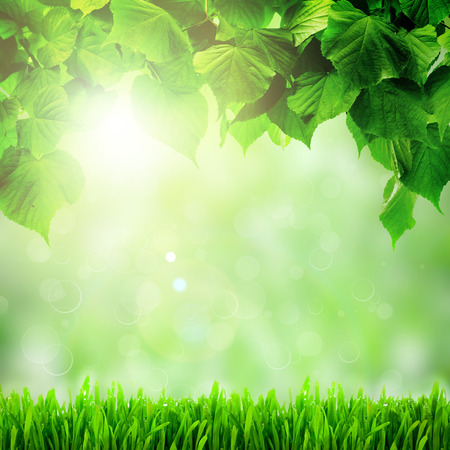 trailway: Fresh spring green field grass with green bokeh and sunlight background Stock Photo