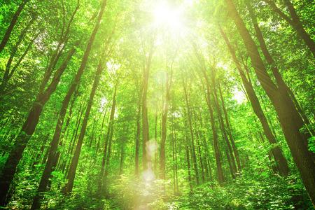 햇빛 배경에 숲 나무