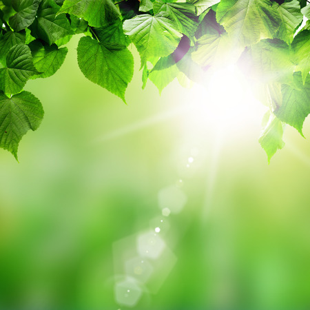 spring forest trees leafs on sunlight backgrounds. Banco de Imagens